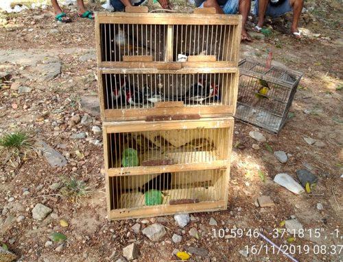 Pelotão Ambiental resgata 74 aves silvestres em feiras livres sergipanas